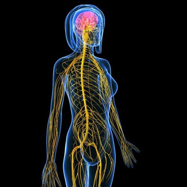 Anatomy and Physiology (distance) - Penny Price Aromatherapy Courses